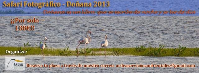 Safari Fotográfico - Doñana 2013