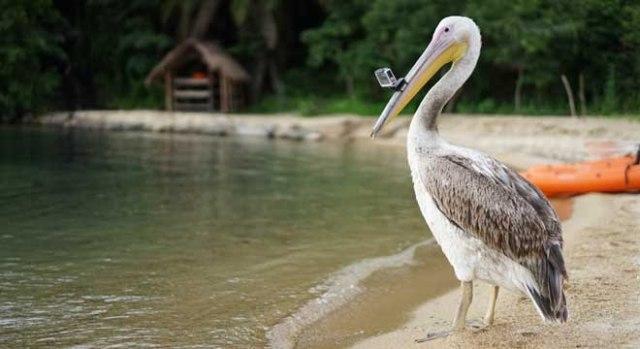Pelican-GoPro-Edit