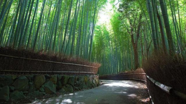 Sagano-Bamboo-Forest--644x362