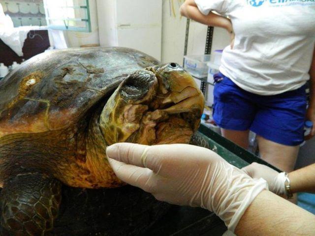 3d-printed-turtle-1