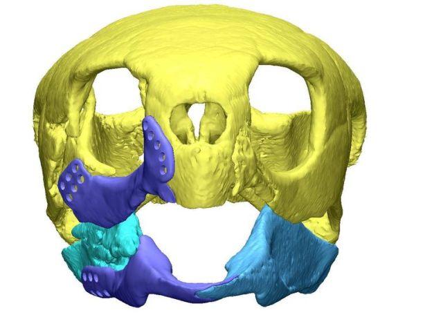 3d-printed-turtle-2