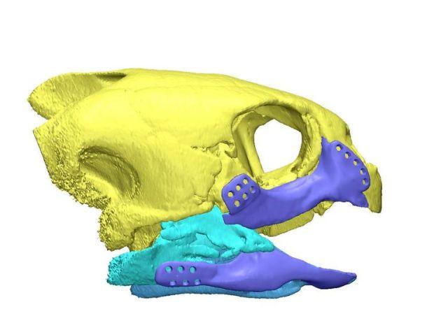 3d-printed-turtle-3