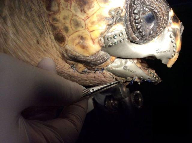 3d-printed-turtle