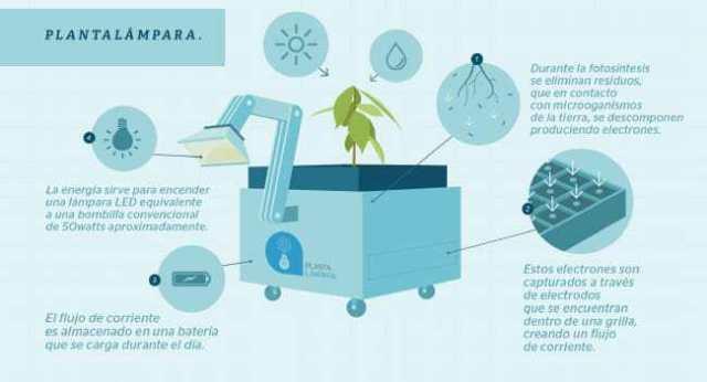 Plantalampara-Infografia