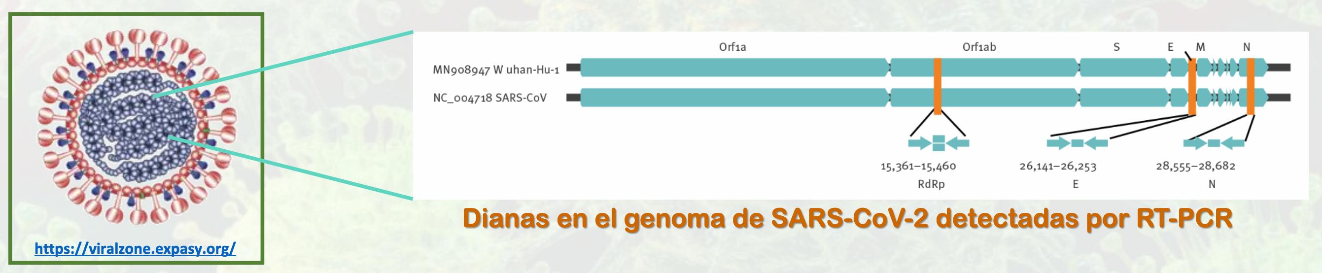 Ardea serviciosAmbientales, Ardeambiental, medioambiente, Covid-19, 3